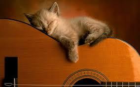 kitten on guitar