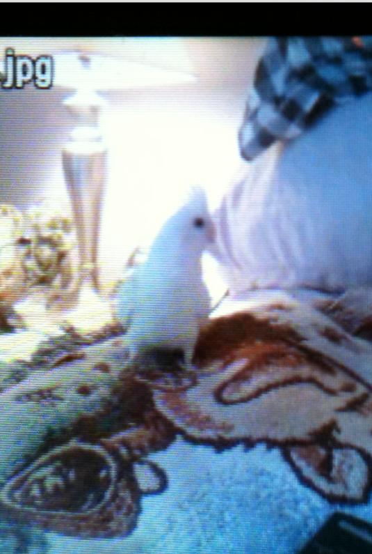 shadybird